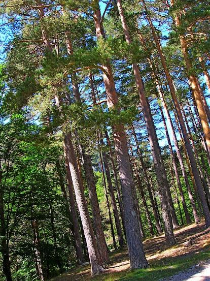 Un paseo por las nubes de Los Pirineos.. Los%2BPirineos%2B2014%2B034