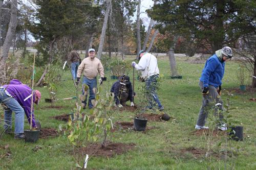 Hammo Fall Planting - Jim Murtagh - BC3G2533.jpg