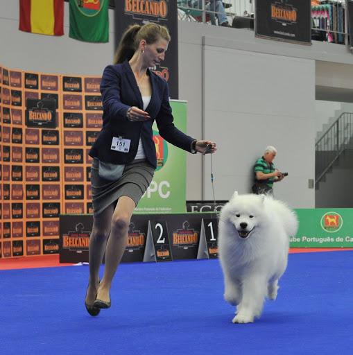 Samoiedo vence Exposição Canina Nacional de Lamego
