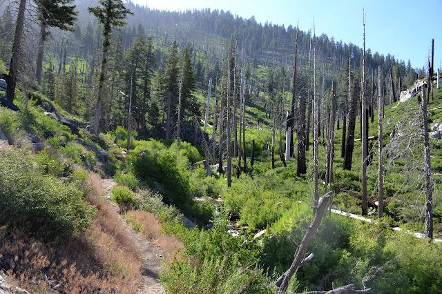 Long Canyon meets Ninemile