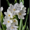 Saint Narcissus