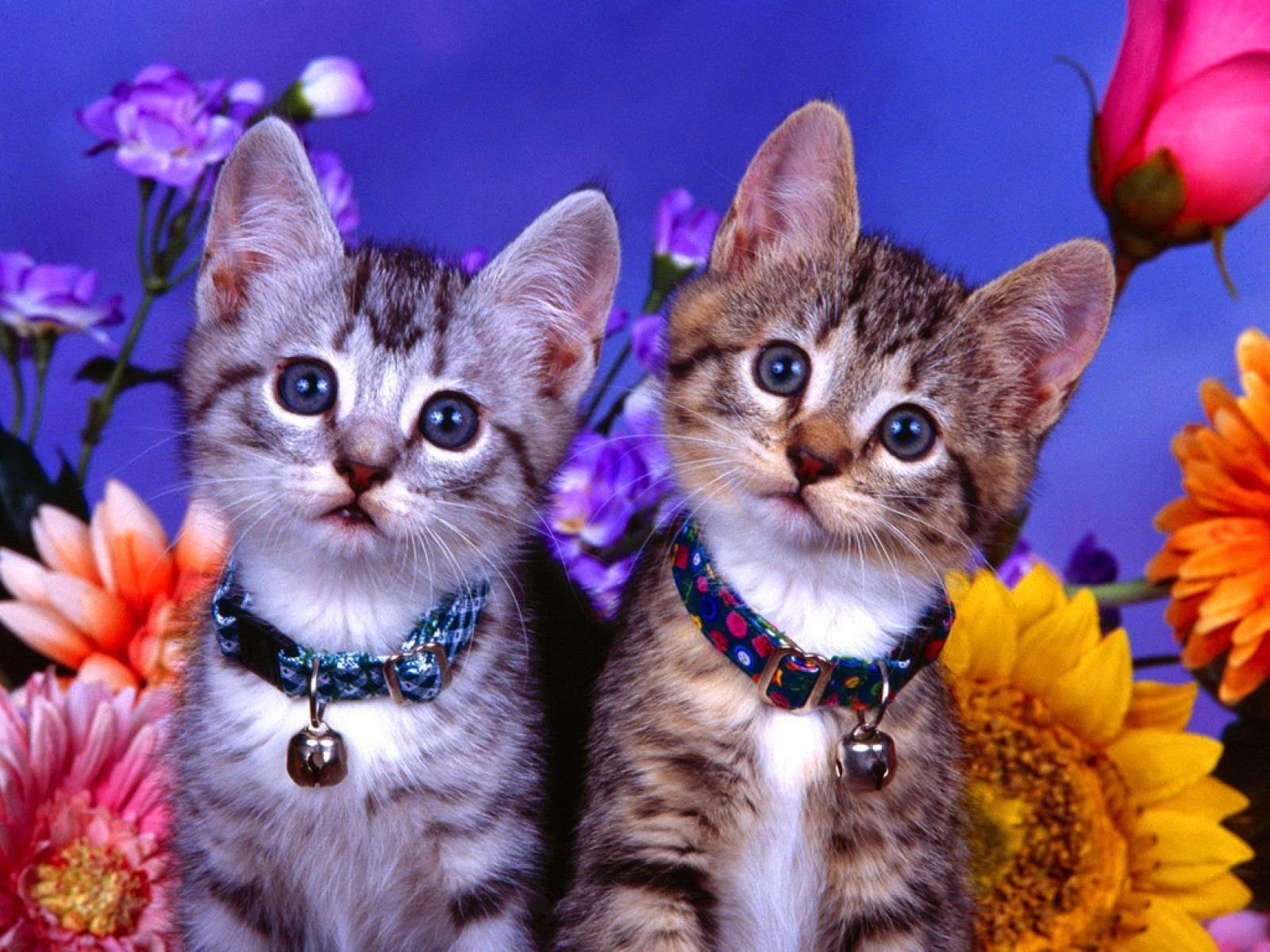 Locanto-Katzen
