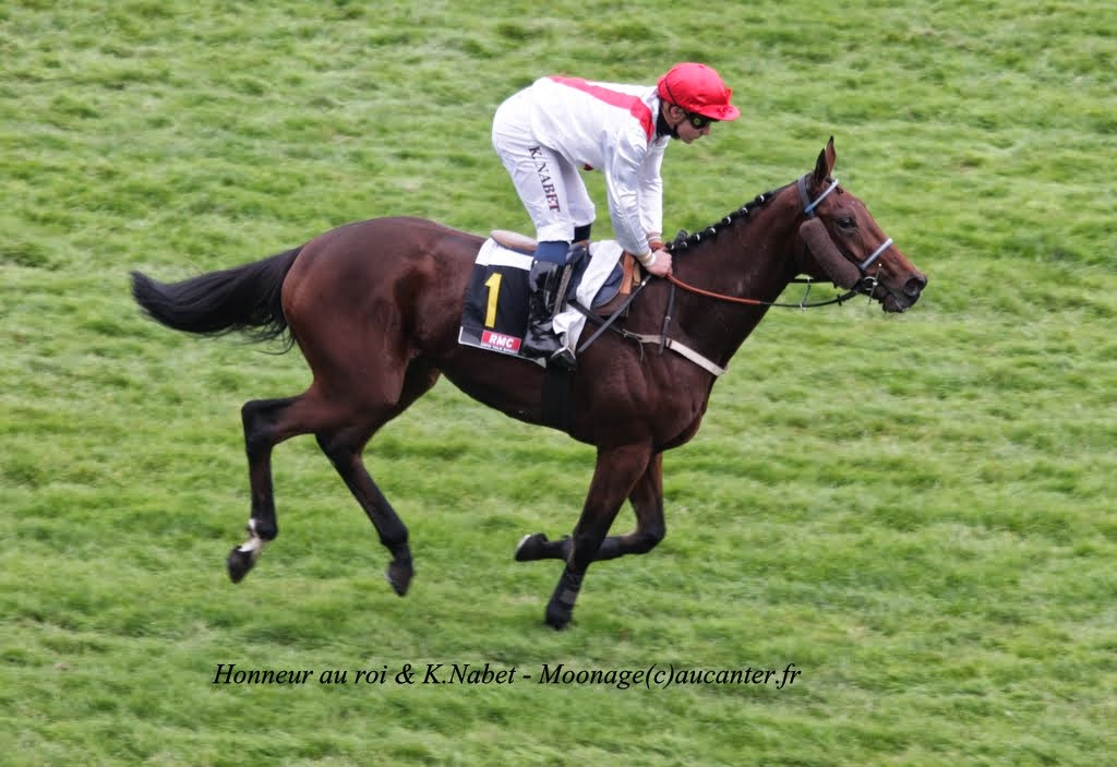 Photos Auteuil 2-11-2014 (48h de l'obstacle) IMG_5385