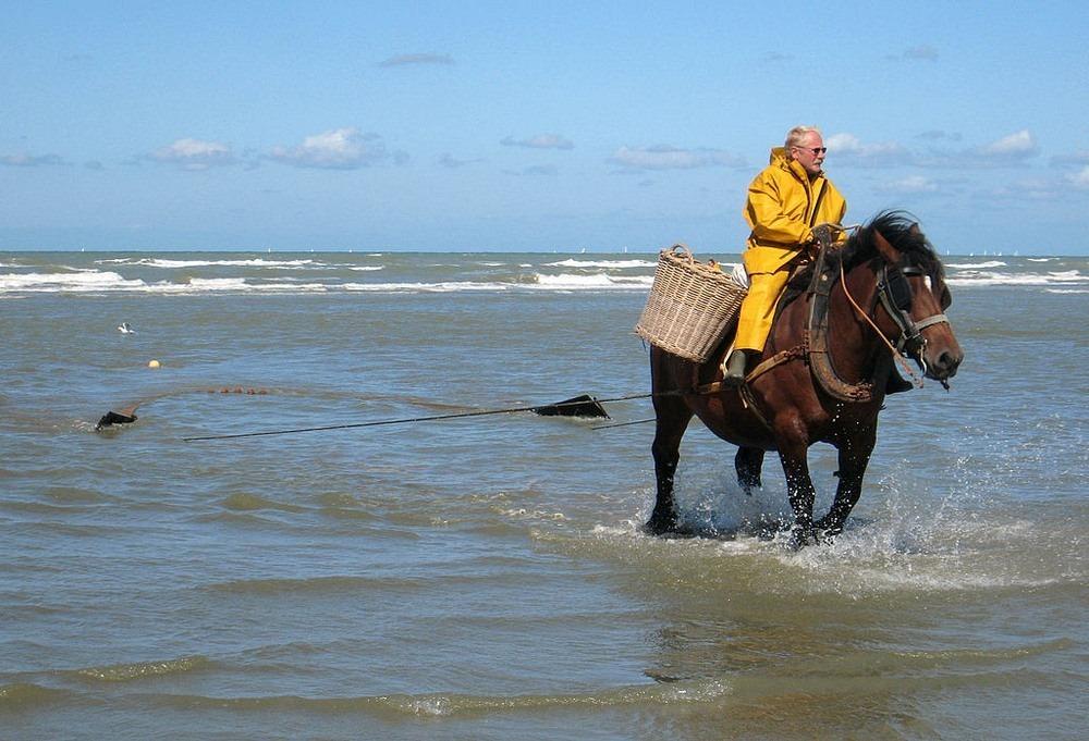 horseback-fishing-oostduinkerke-1