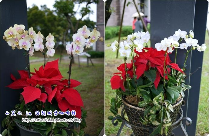 12 金車蘭花園