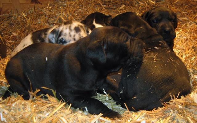 Star's girls at 3 weeks