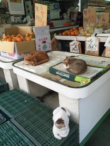 果物屋の店先の猫たち