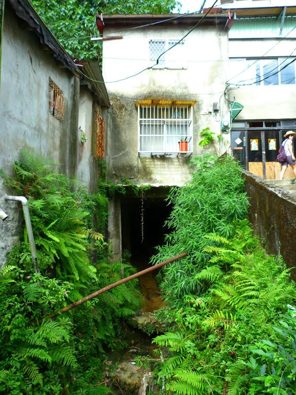 Taipei. Si Shou shan, en plein coeur de Taipei. Accès par un chemin bien plus sauvage. - P1240812.JPG