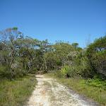 Walking through the open land north of Robinson Creek (371194)