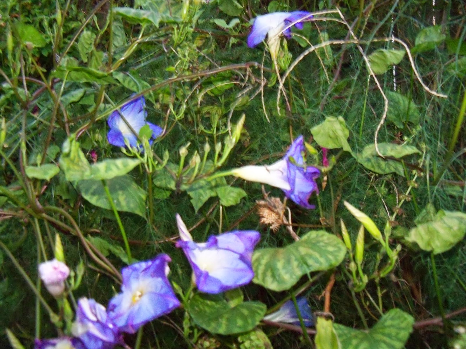 Gardening 2014 - 116_5263.JPG