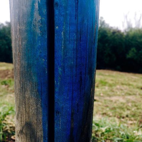 azul thefromthetree