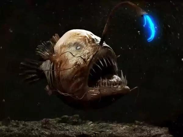 The Lophiiforme (or fishing fish)