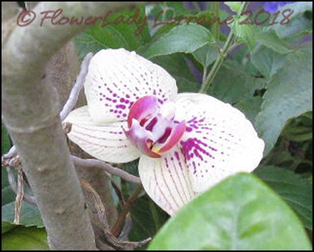 04-19-orchid-surprise2