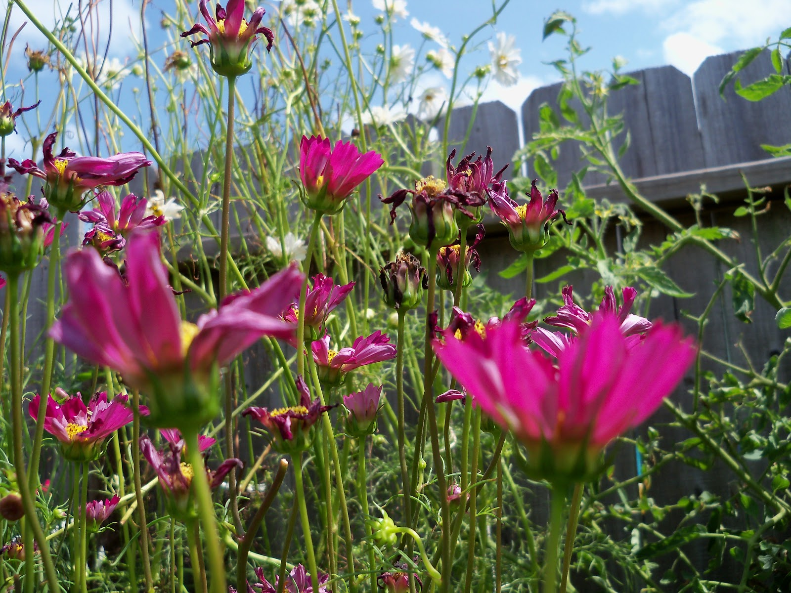 Gardening 2010, Part Three - 101_5120.JPG