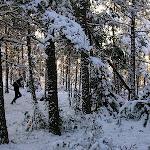 Luonnonmaa Tammikuu 2005