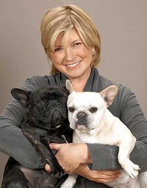 martha dogs