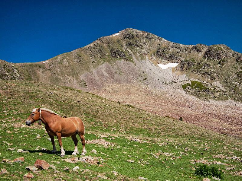 Cavalls pasturant al peu del pic de Perafita