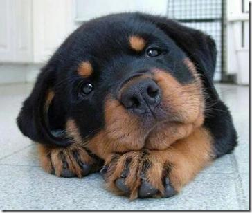 dog023