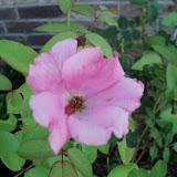 Gardening 2010, Part Three - 101_3996.JPG