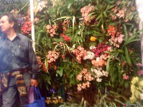 Foire de Nice du 7 mars au 15 mars 2009 exposition de murs végétaux en sphaigne
