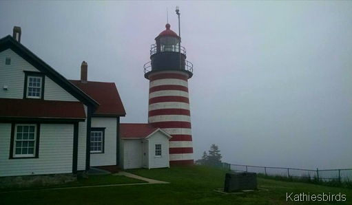 1. West Quoddy head SP 5-30-15