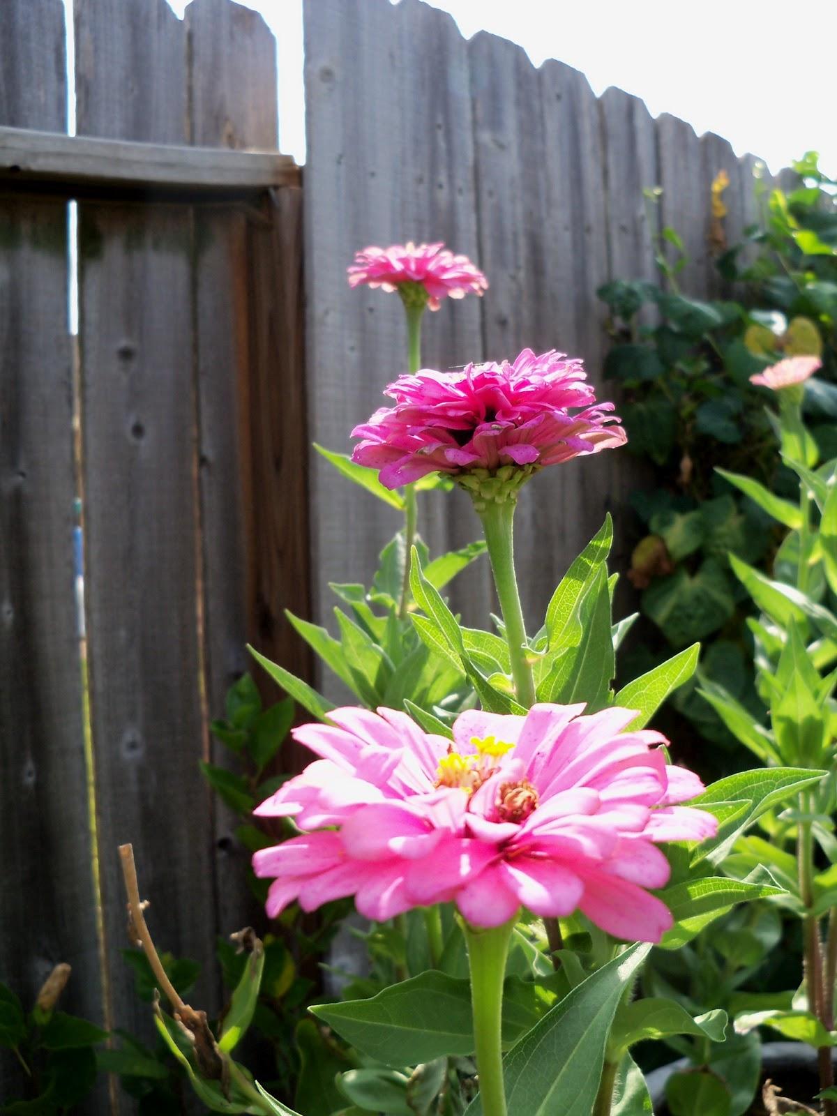 Gardening 2011 - 100_0088.JPG