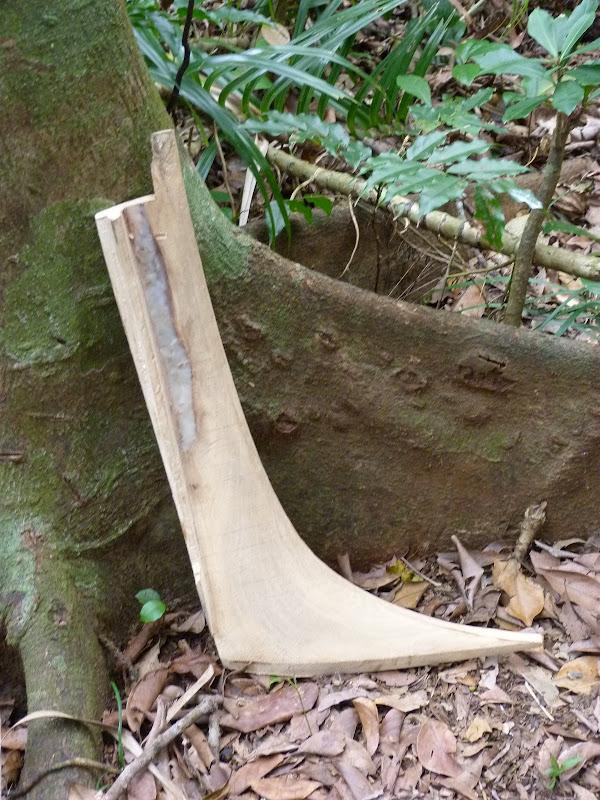 cet arbre est choisi pour faire les étraves et poupes des canots