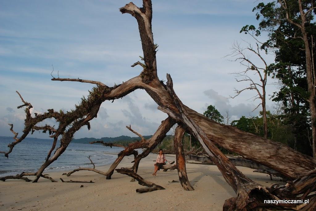 Plaża słoni :-) dotknięta przed laty wielką falą.