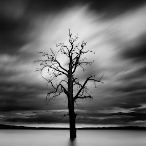 The lonely one by Jozef Micic - Landscapes Travel ( exposure, tree, white, long, black )