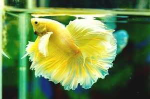 5-gallon-betta-fish-tank-(3)