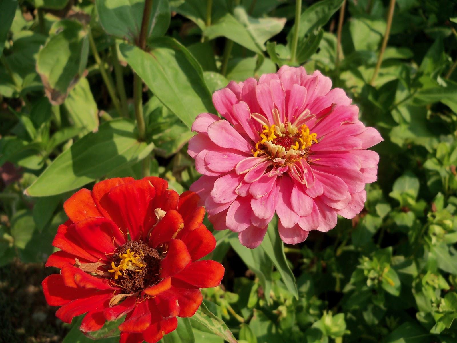 Gardening 2011 - 100_9375.JPG