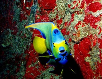 [maragogi-arrecifes-35]