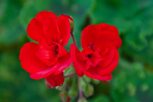 Roso verde di Fiorenza Aldo Photo
