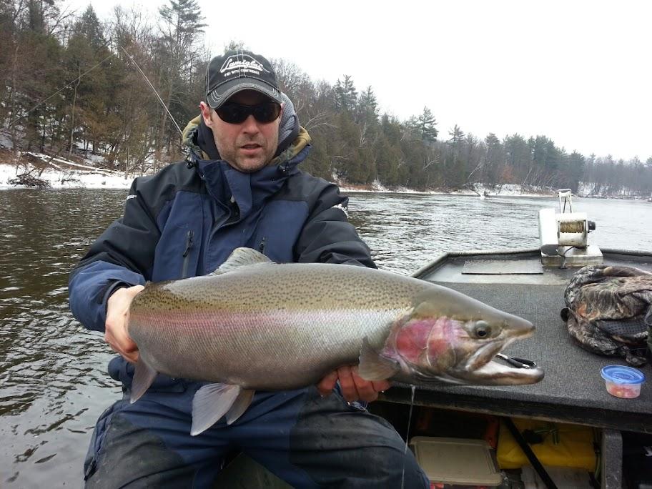 Muskegon river and grand river steelhead fishing getting for Muskegon river fishing