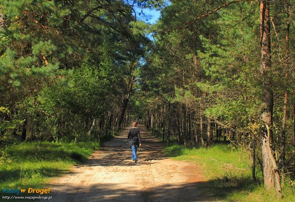 Dojście lasem na plażę w Czołpinie