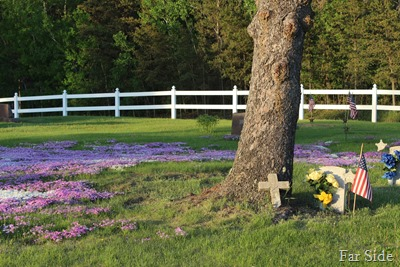 Phlox at Osage cemetery