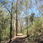 Nepean River track (189840)