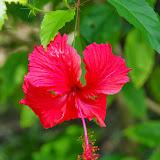 01-01-14 Western Caribbean Cruise - Day 4 - Roatan, Honduras - IMGP0868.JPG
