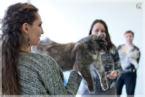 cats-show-24-03-2012-fife-spb-www.coonplanet.ru-111.jpg