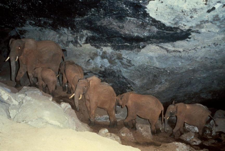 cave-elephants-mount-elgon-1