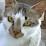 Graciela Araya's profile photo