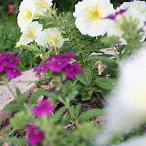 Gardening 2012 - IMG_2801.JPG