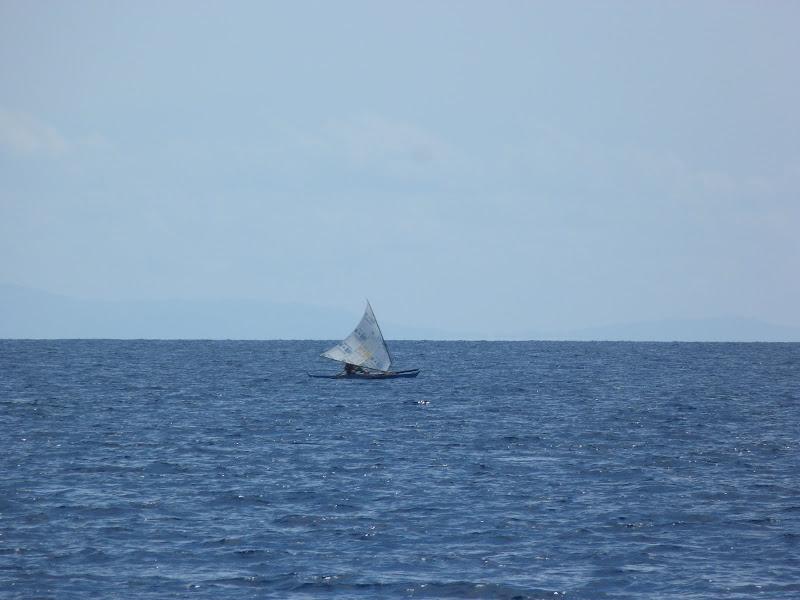 Dauin, Dumaguete, APO Island (Negros) - philippines%2Bdeux%2B587.JPG
