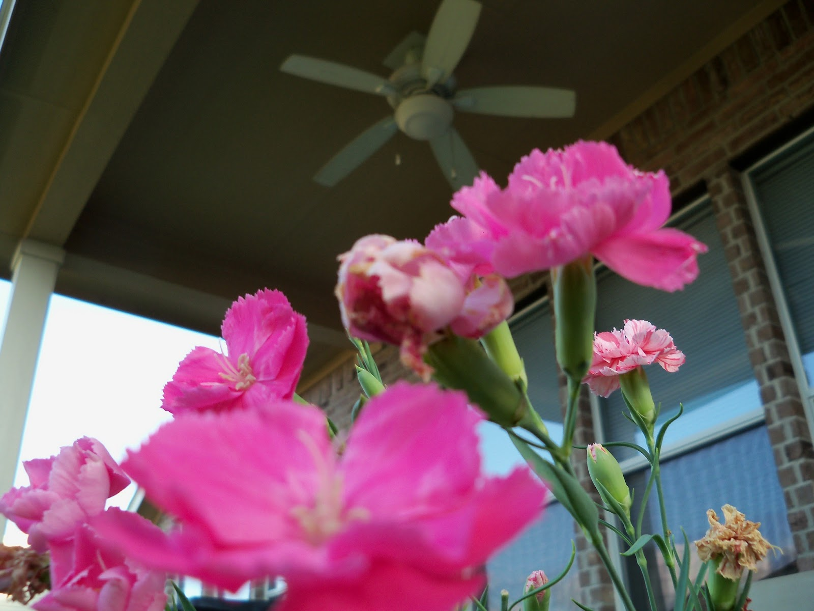 Gardening 2012 - 115_2341.JPG