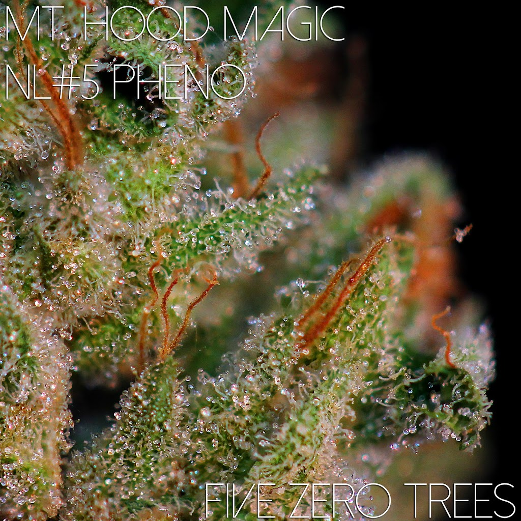 Mt Hood NL Pheno Macro