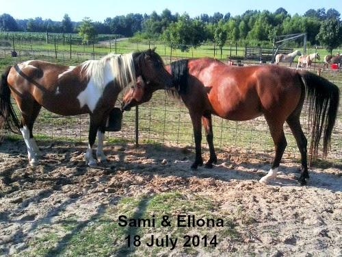 Sami & Ellona @ LP Painted Ponys