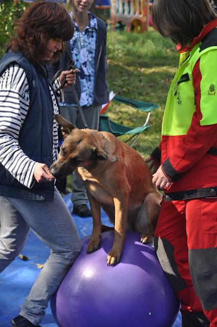 Survival voor Baas en Hond 2012 - DSC_0478.JPG