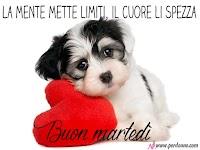buon martedi immagine cane cuore amore la mente mette limiti il cuore li spezza.jpg