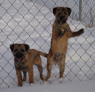SHEA on left and INDY on right standing against the fence