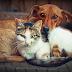 Projeto torna obrigatória a implantação de chip de identificação em cães e gatos